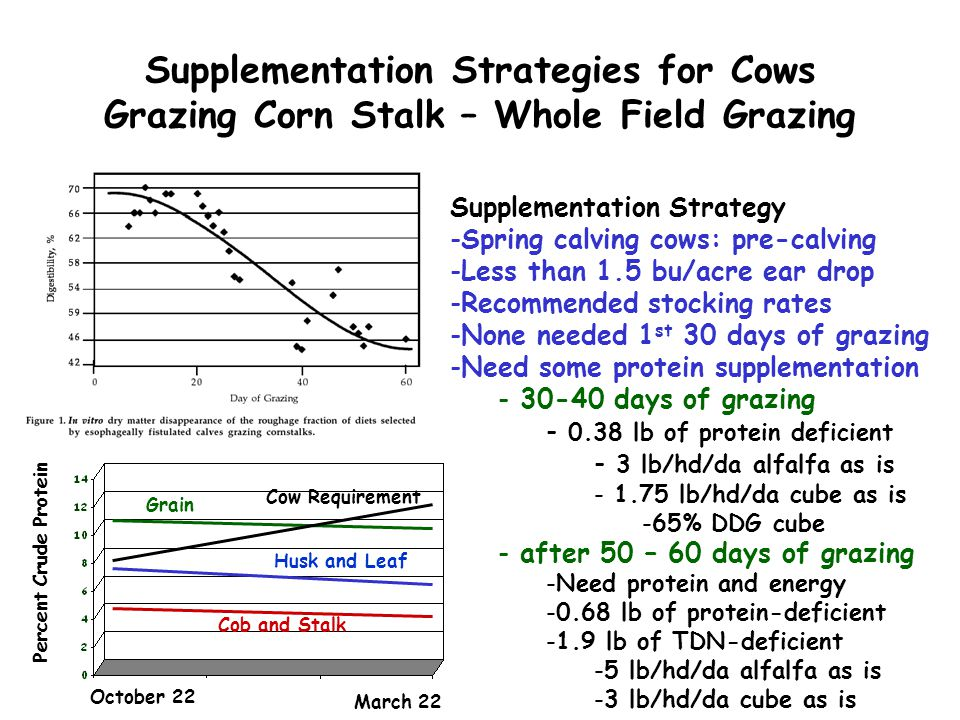 Supplementation Strategies for Cows Grazing Corn Stalk – Whole Field Grazing