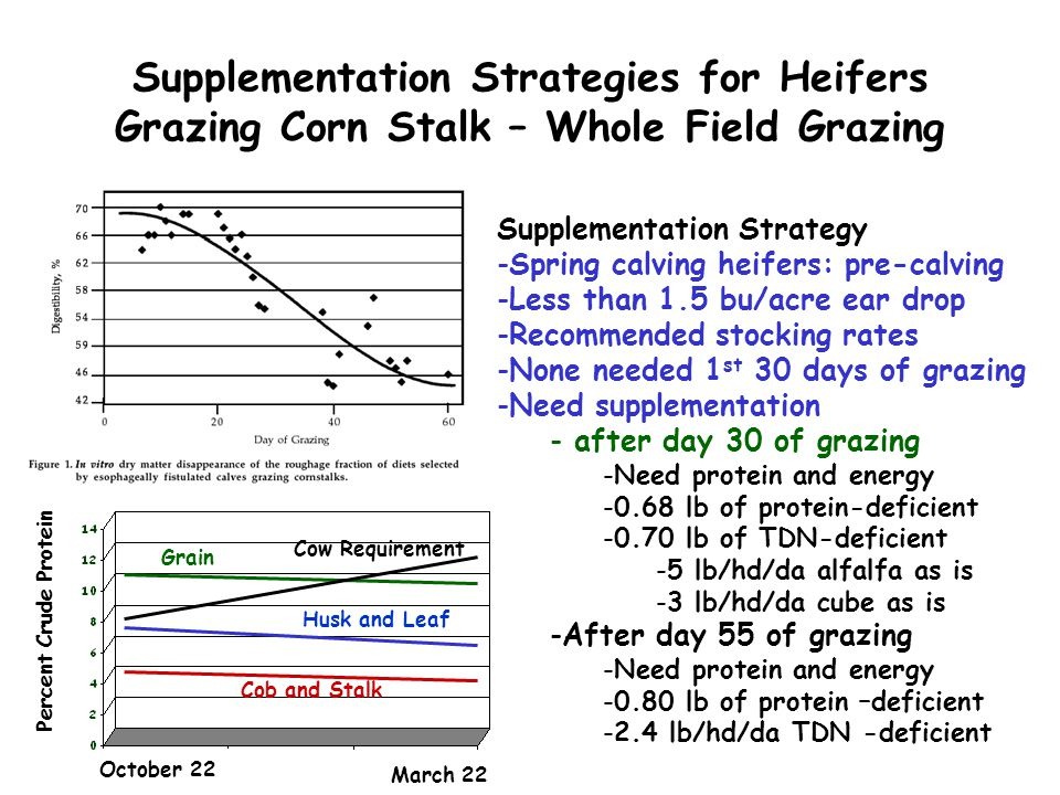 Supplementation Strategies for Heifers Grazing Corn Stalk – Whole Field Grazing