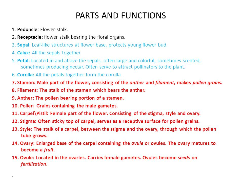 PARTS AND FUNCTIONS 1. Peduncle: Flower stalk.