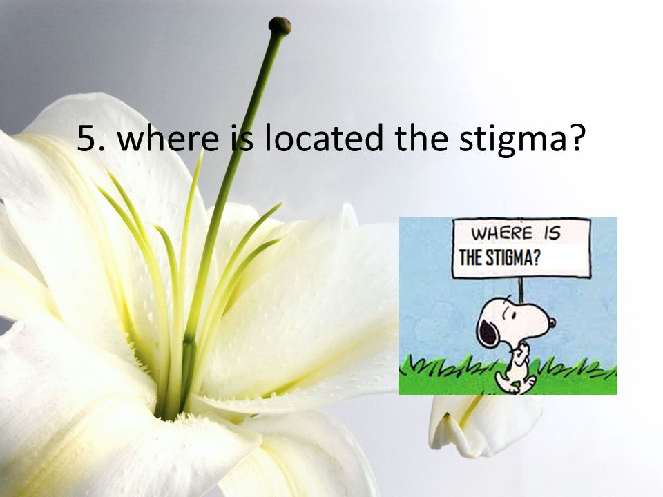 5. where is located the stigma