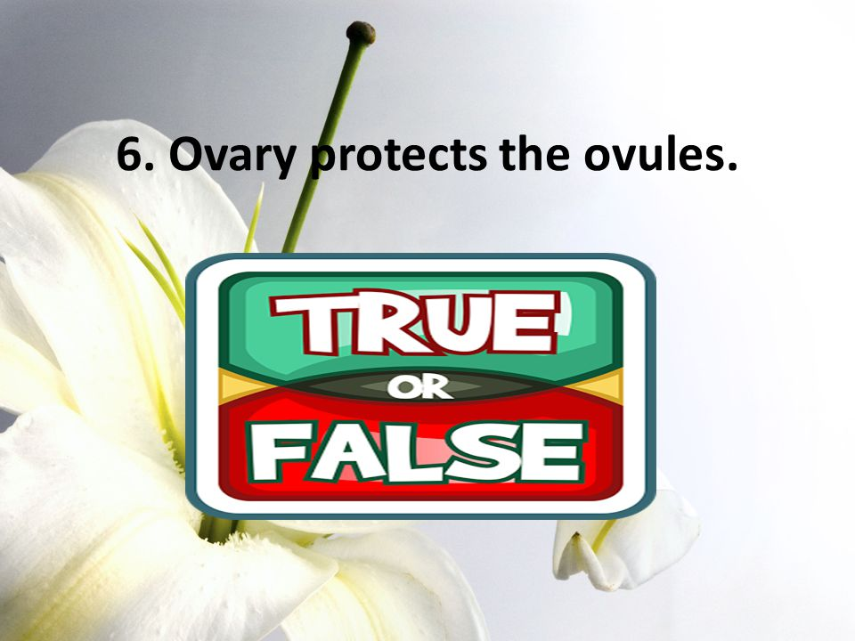 6. Ovary protects the ovules.
