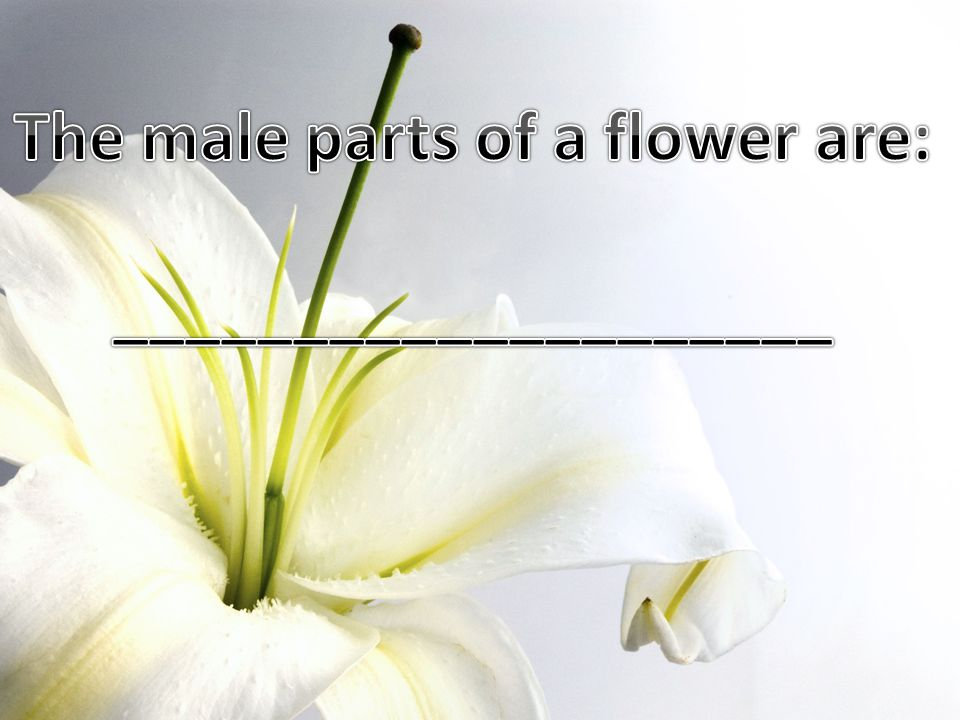The male parts of a flower are: ____________________