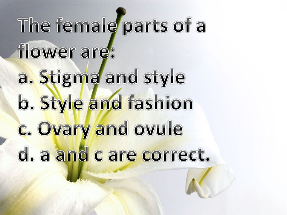 The female parts of a flower are:
