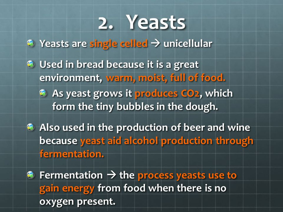 Yeasts Yeasts are single celled  unicellular