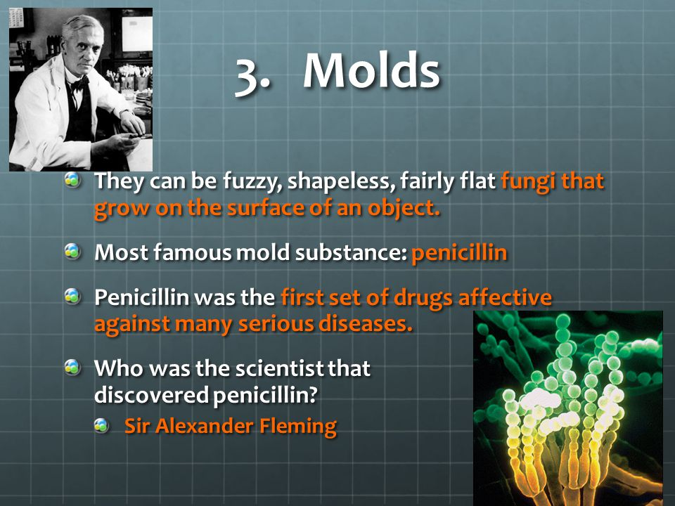 Molds They can be fuzzy, shapeless, fairly flat fungi that grow on the surface of an object. Most famous mold substance: penicillin.