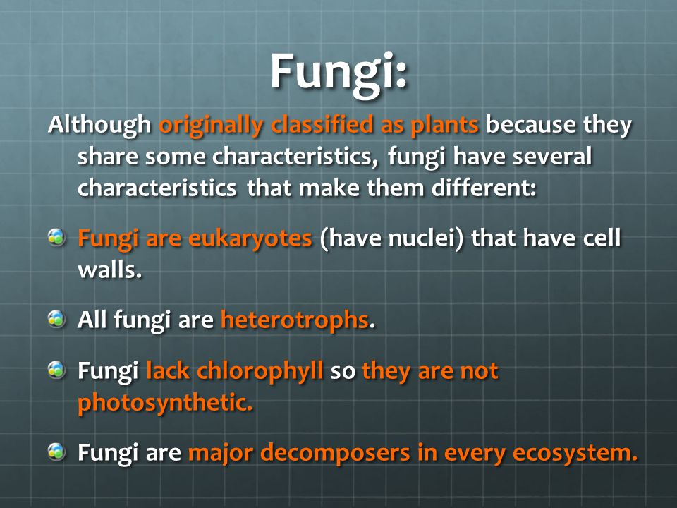 Fungi: