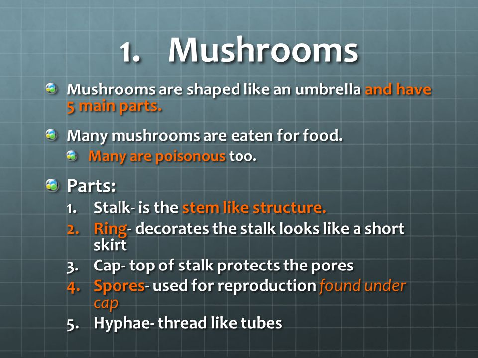 Mushrooms Mushrooms are shaped like an umbrella and have 5 main parts. Many mushrooms are eaten for food.