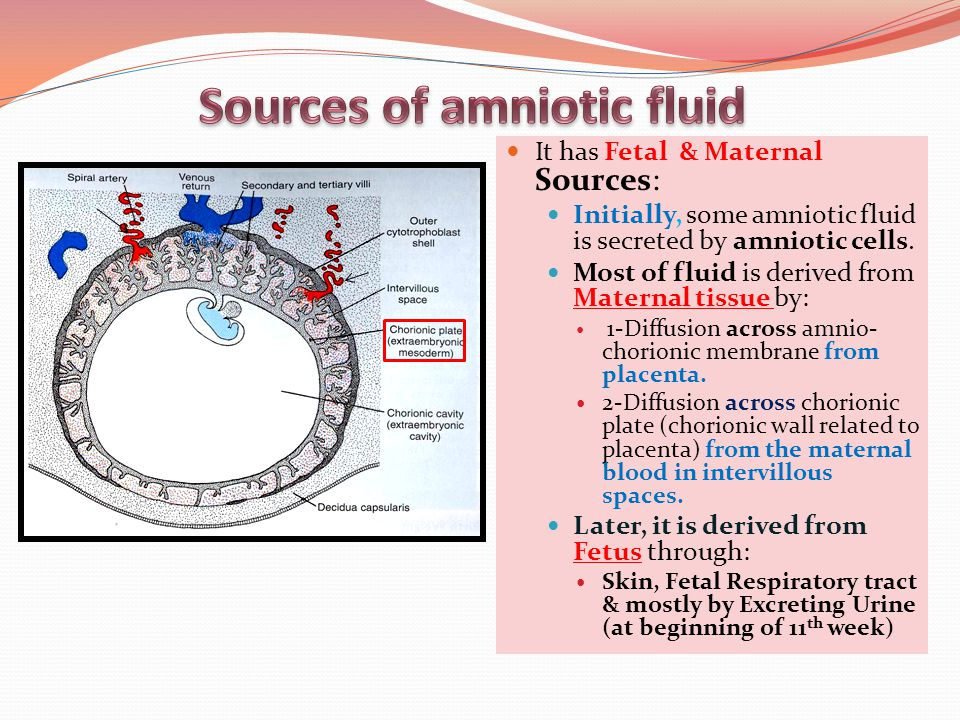 Sources of amniotic fluid