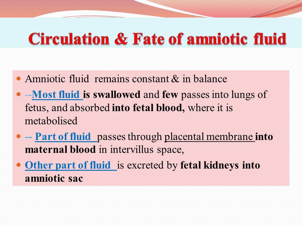 Circulation & Fate of amniotic fluid