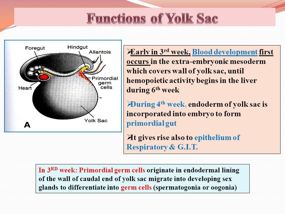 Functions of Yolk Sac