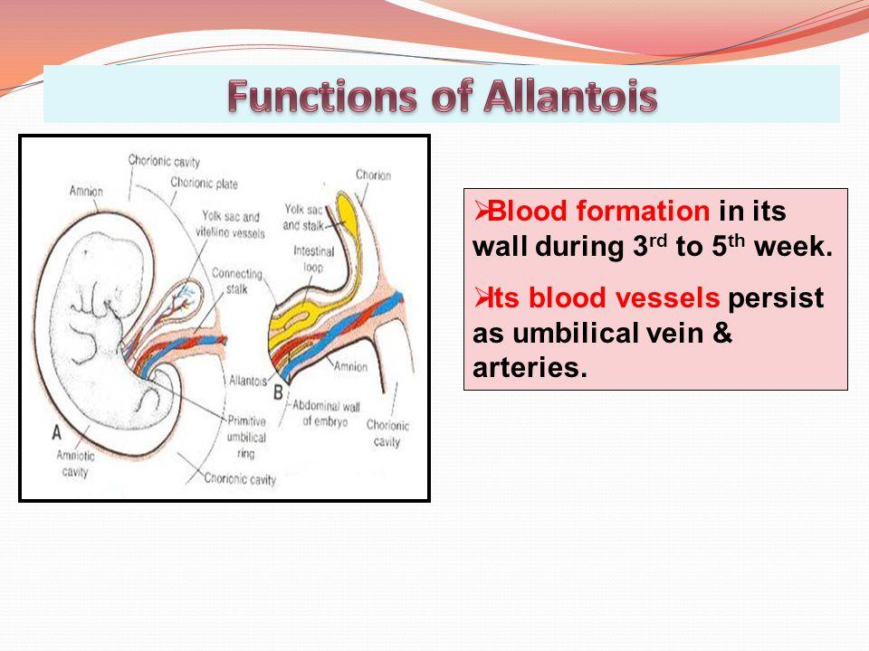 Functions of Allantois