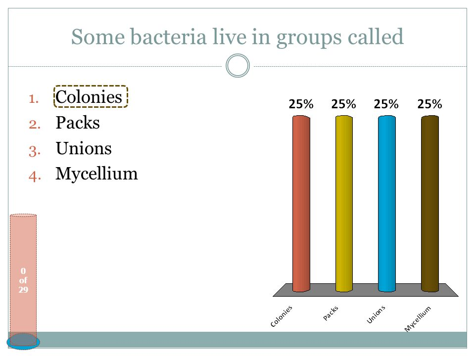 Some bacteria live in groups called