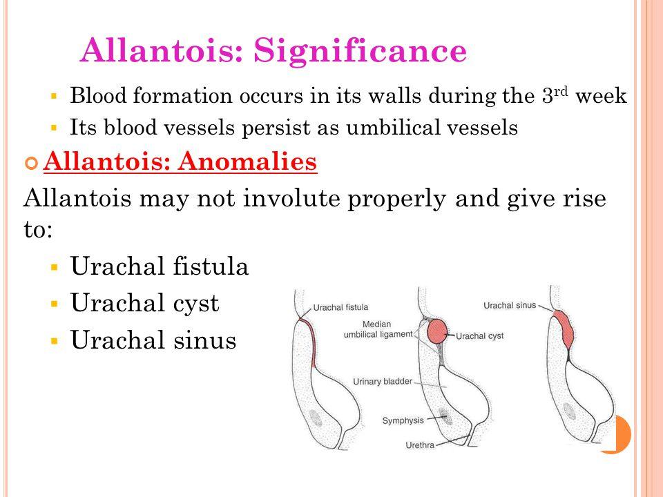 Allantois: Significance