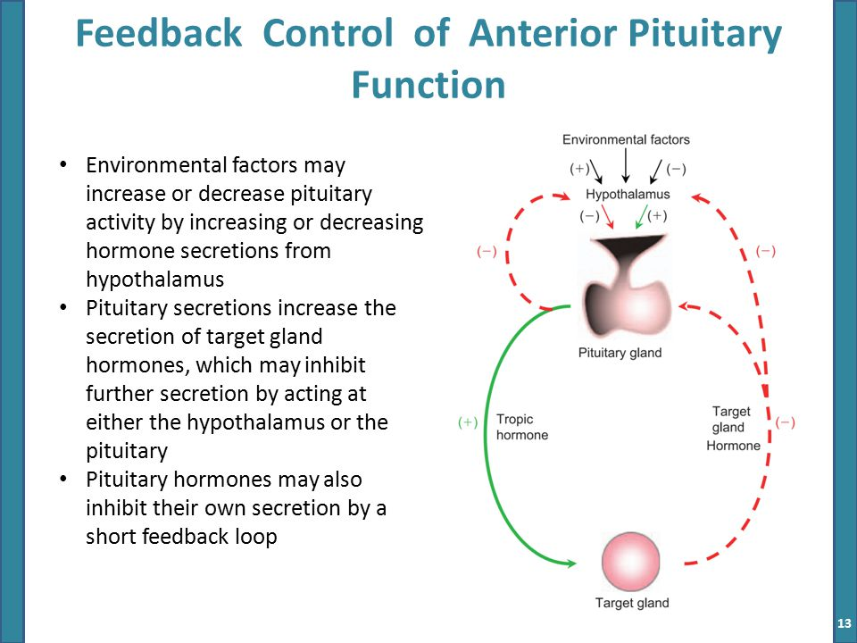 Hypothalamus Pituitary Gland Ppt Video Online Download