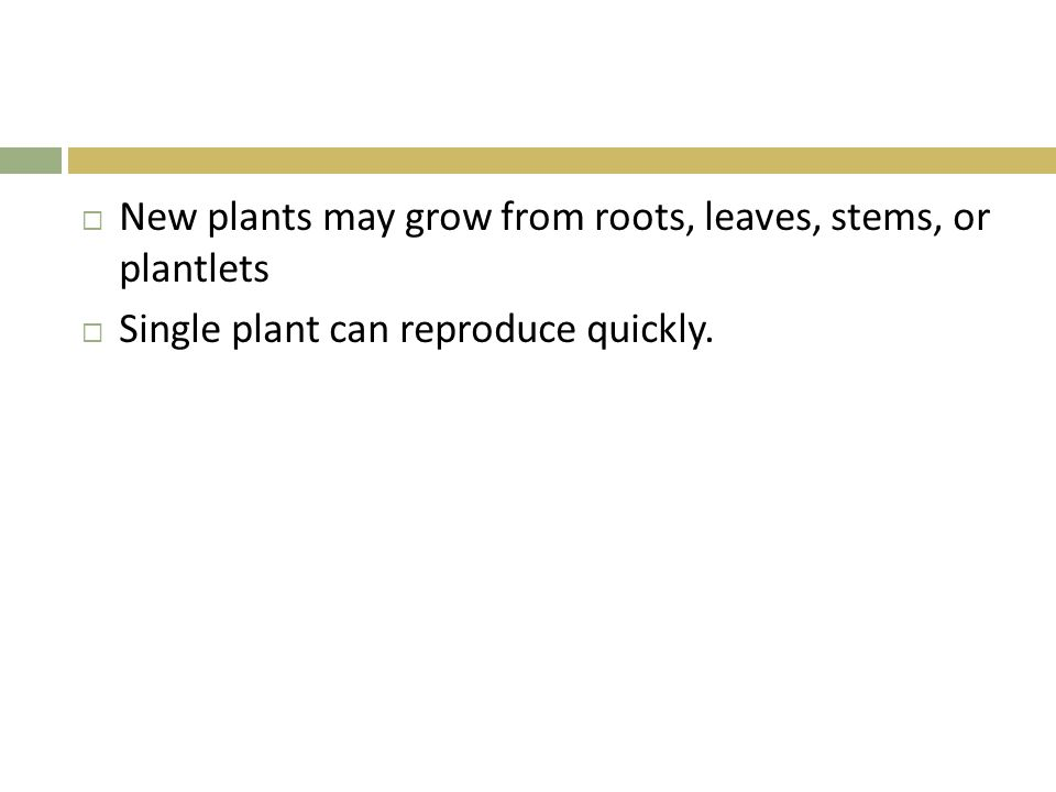 New plants may grow from roots, leaves, stems, or plantlets