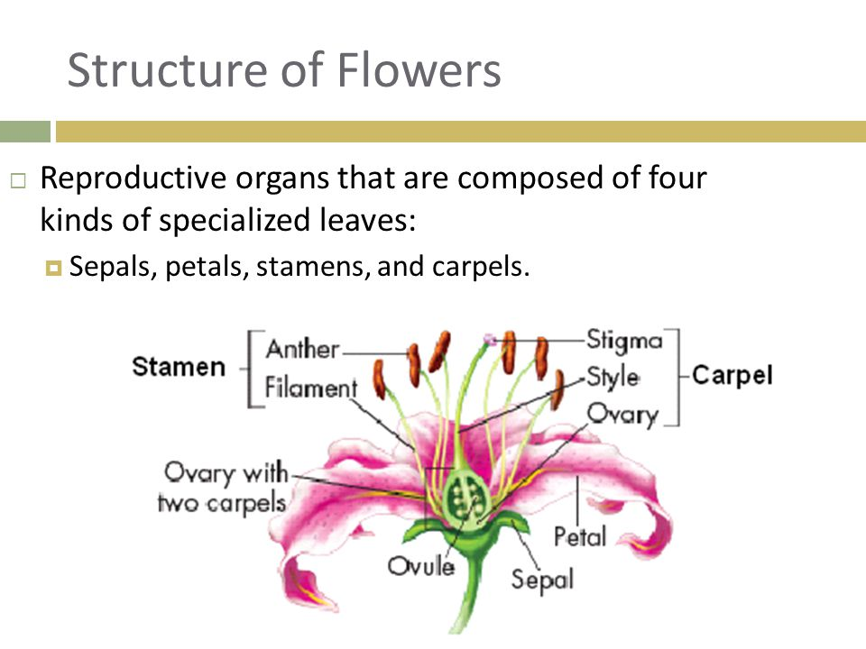 Structure of Flowers Reproductive organs that are composed of four kinds of specialized leaves: Sepals, petals, stamens, and carpels.