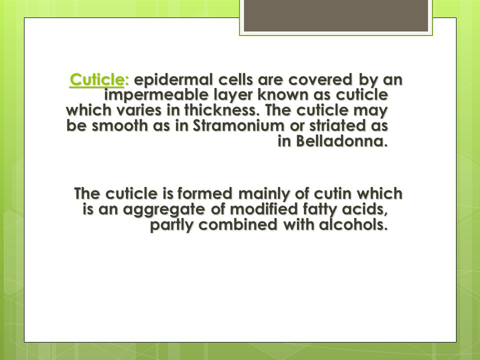 Cuticle: epidermal cells are covered by an impermeable layer known as cuticle which varies in thickness. The cuticle may be smooth as in Stramonium or striated as in Belladonna.