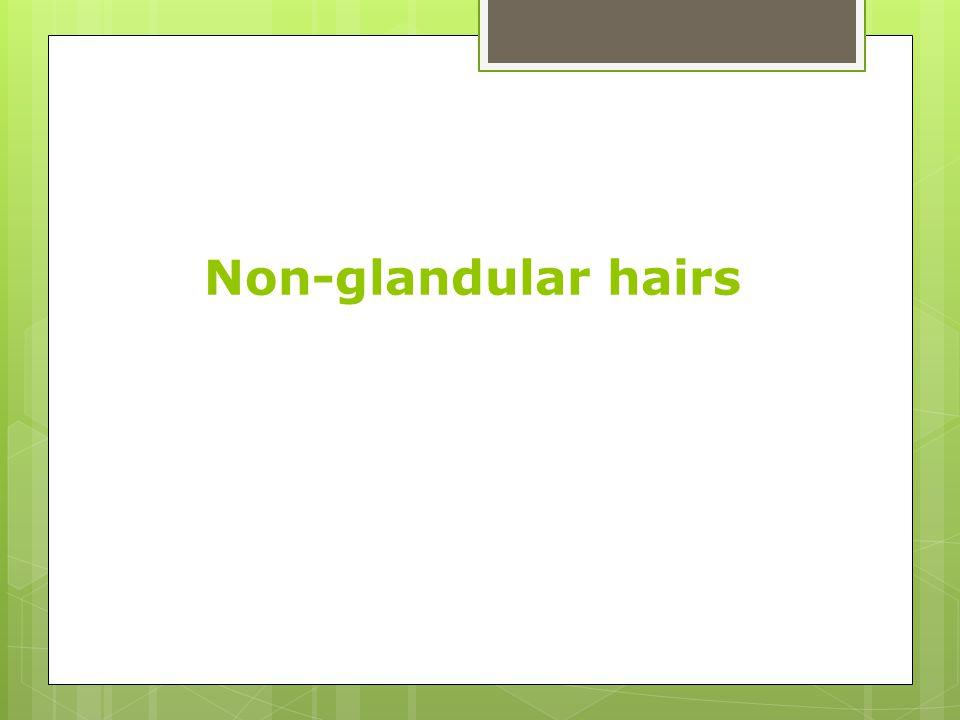 Non-glandular hairs