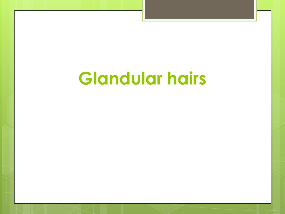Glandular hairs