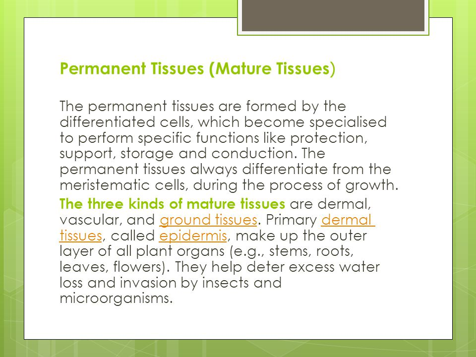 (Permanent Tissues (Mature Tissues