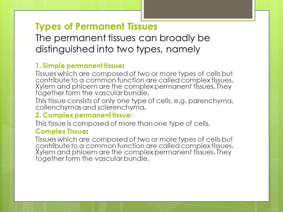 Types of Permanent Tissues The permanent tissues can broadly be distinguished into two types, namely