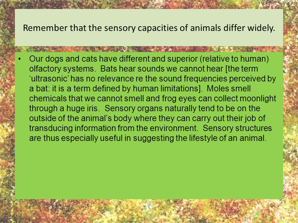 Remember that the sensory capacities of animals differ widely.