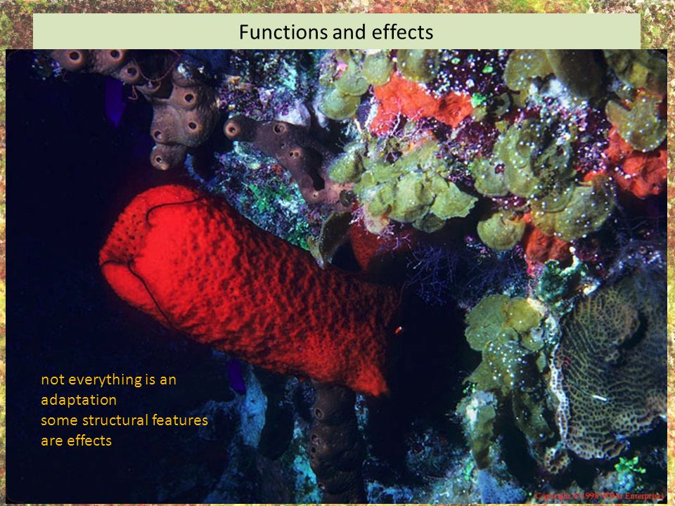 Functions and effects not everything is an adaptation