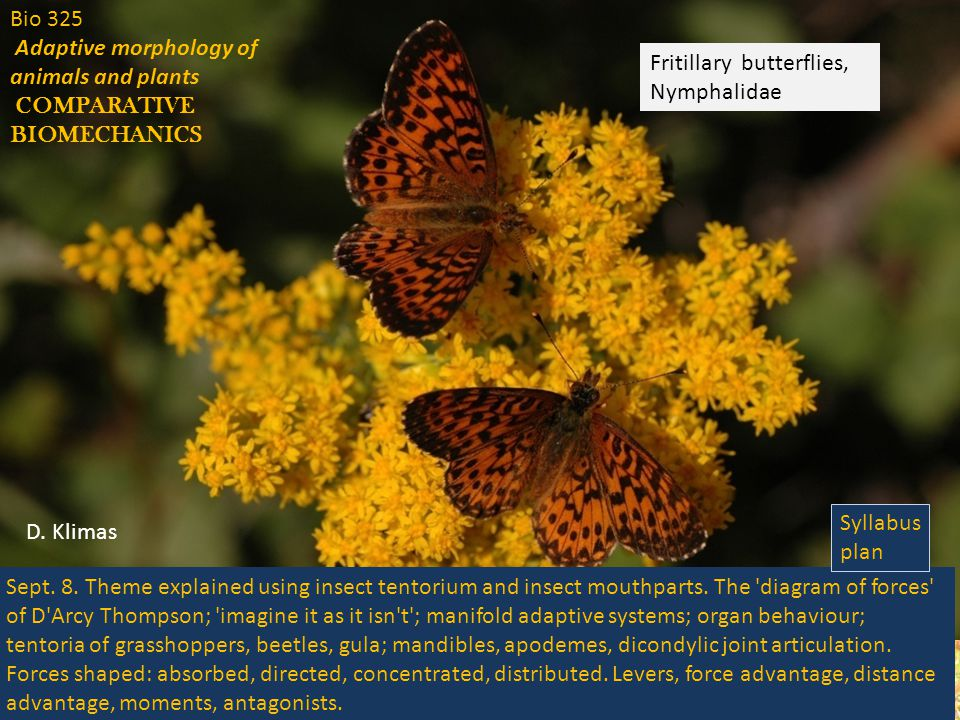 Bio 325 Adaptive morphology of animals and plants COMPARATIVE BIOMECHANICS