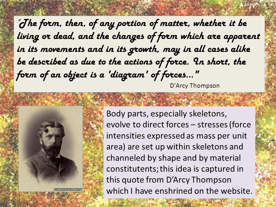 The form, then, of any portion of matter, whether it be living or dead, and the changes of form which are apparent in its movements and in its growth, may in all cases alike be described as due to the actions of force. In short, the form of an object is a diagram of forces...
