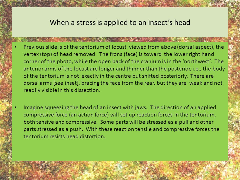 When a stress is applied to an insect's head