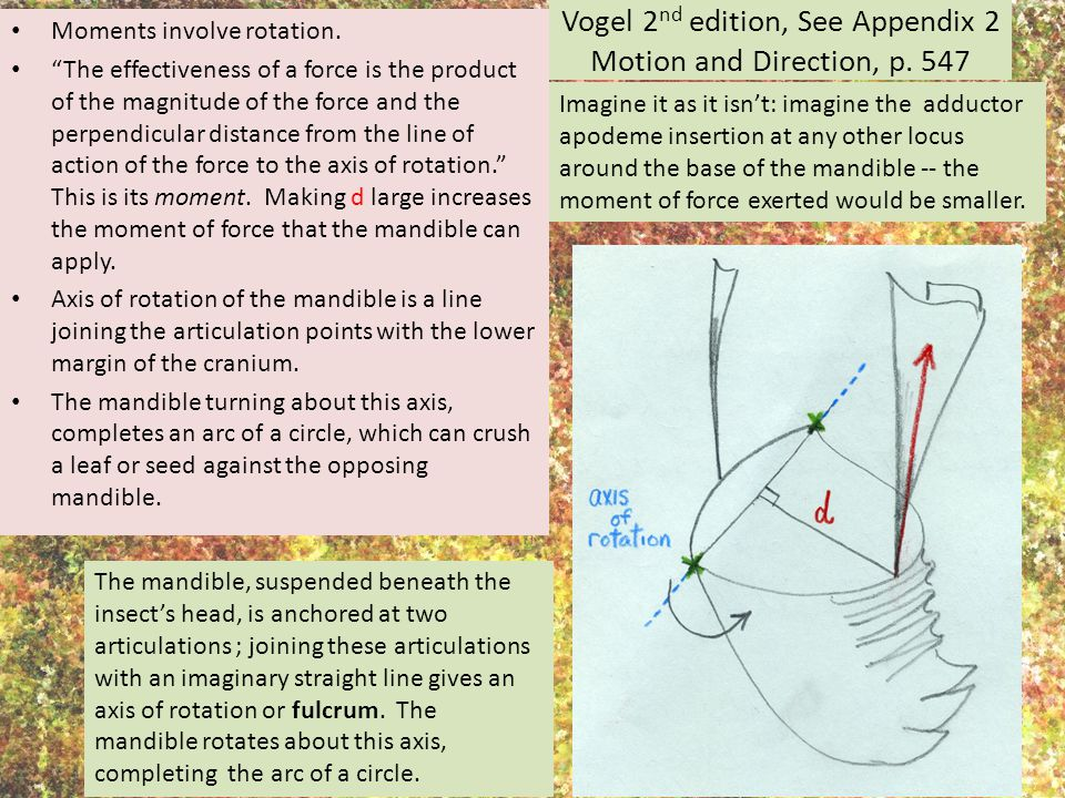Vogel 2nd edition, See Appendix 2 Motion and Direction, p. 547