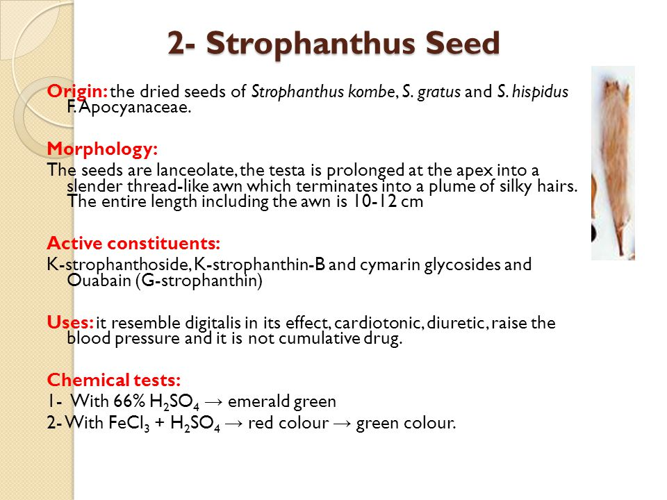 2- Strophanthus Seed Origin: the dried seeds of Strophanthus kombe, S. gratus and S. hispidus F. Apocyanaceae.