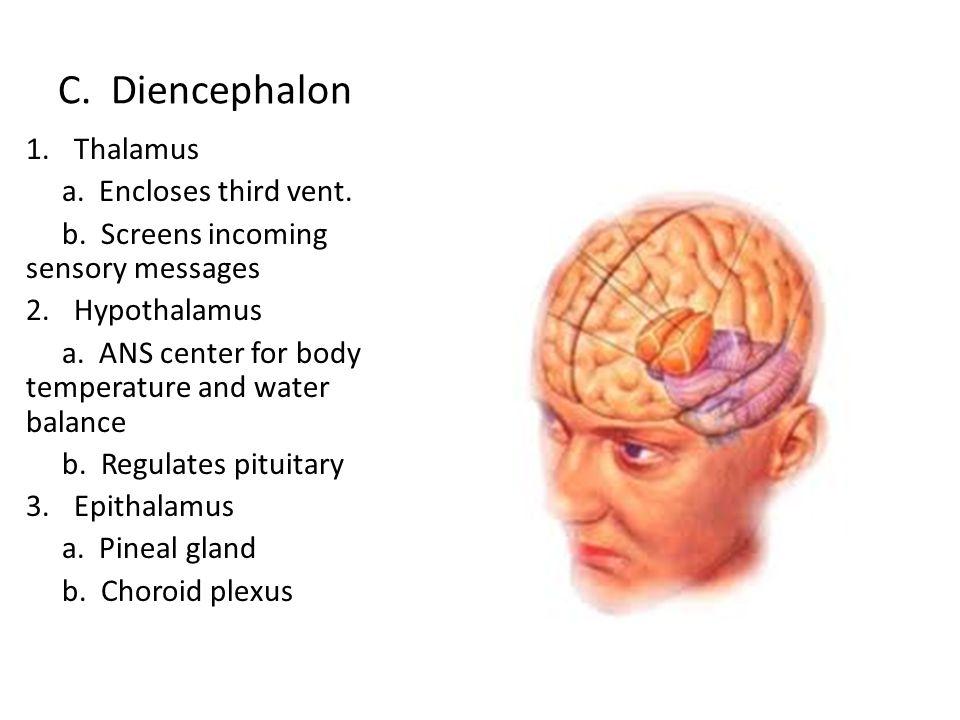C. Diencephalon Thalamus a. Encloses third vent.