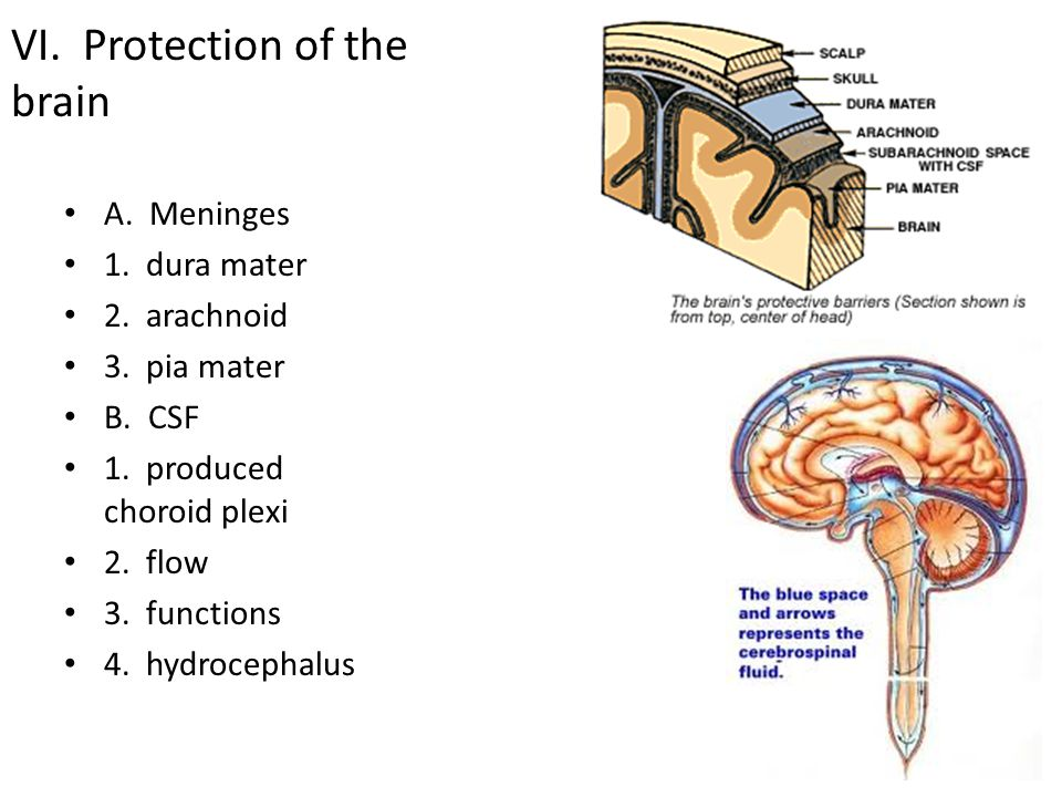 VI. Protection of the brain