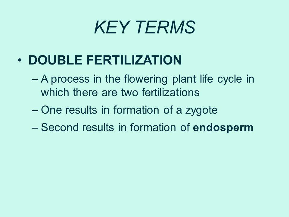KEY TERMS DOUBLE FERTILIZATION