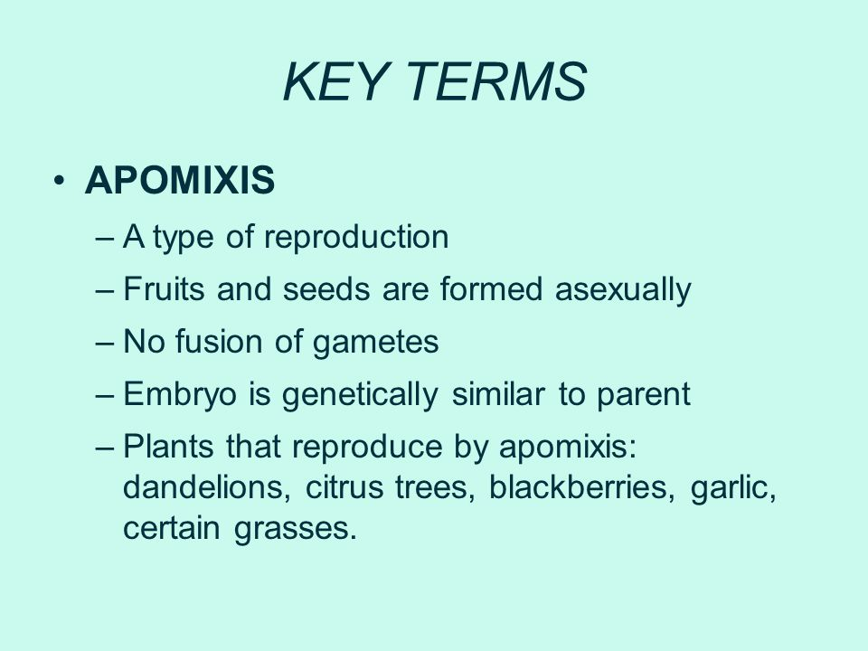 KEY TERMS APOMIXIS A type of reproduction