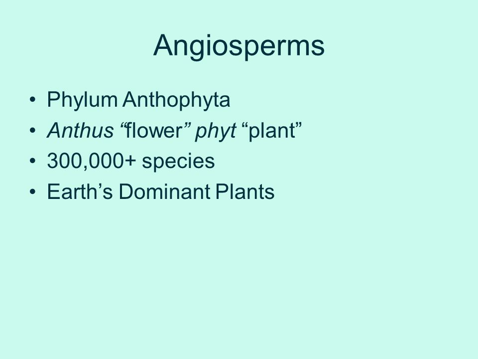 Angiosperms Phylum Anthophyta Anthus flower phyt plant
