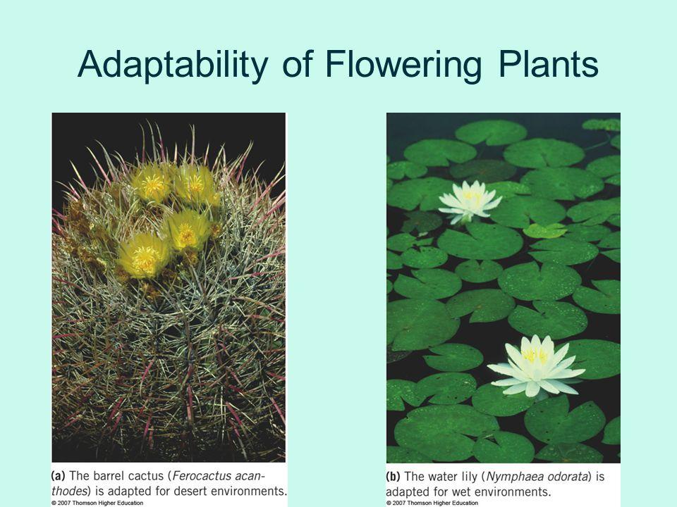Adaptability of Flowering Plants