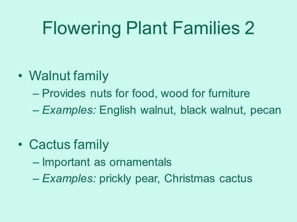Flowering Plant Families 2