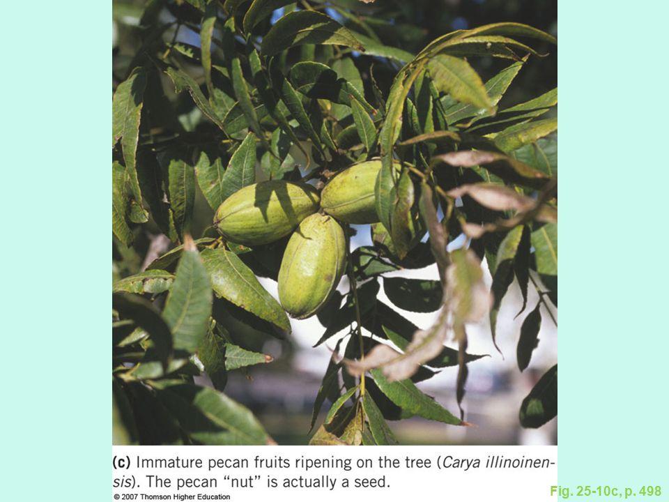 Figure 25.10: The walnut family.