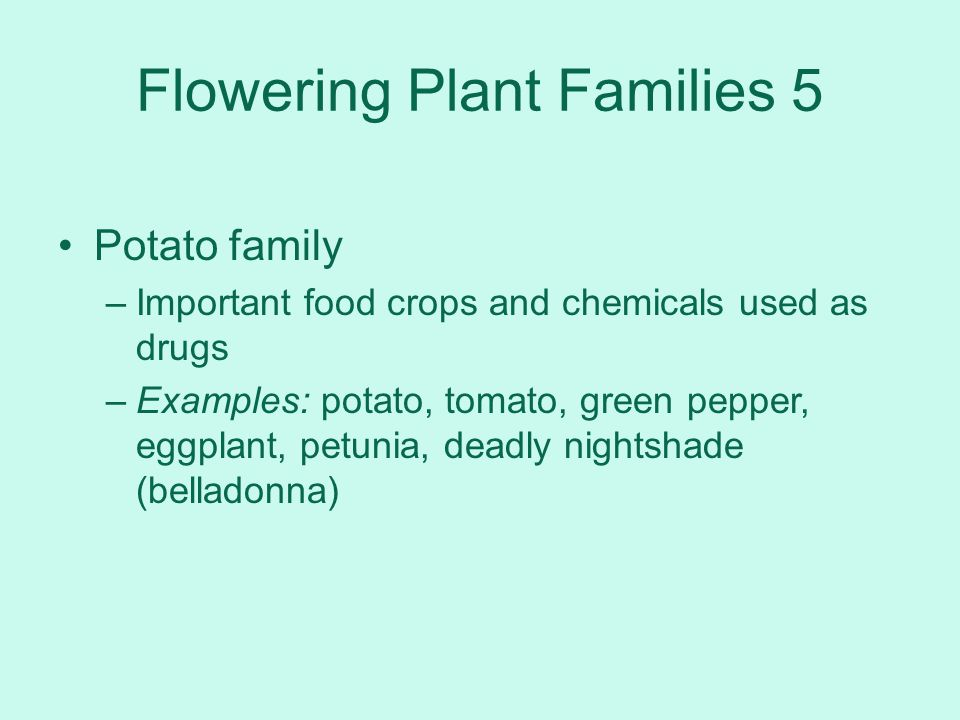 Flowering Plant Families 5