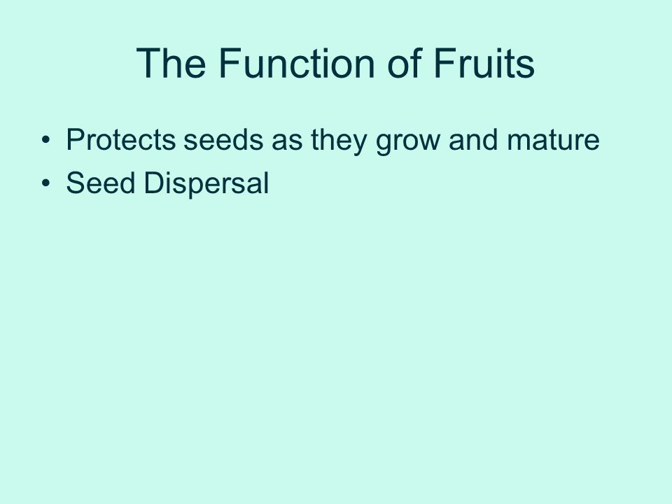 The Function of Fruits Protects seeds as they grow and mature