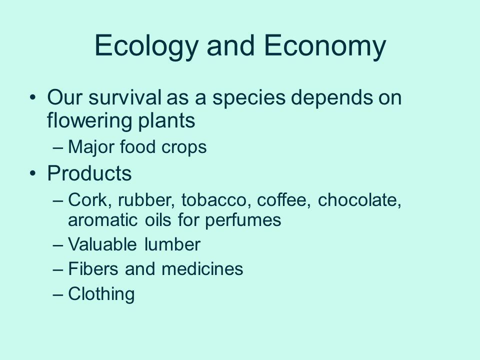 Ecology and Economy Our survival as a species depends on flowering plants. Major food crops. Products.