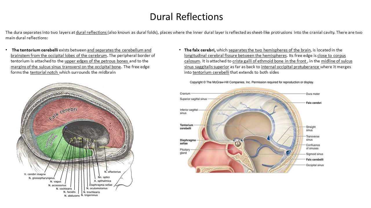 Dural Reflections