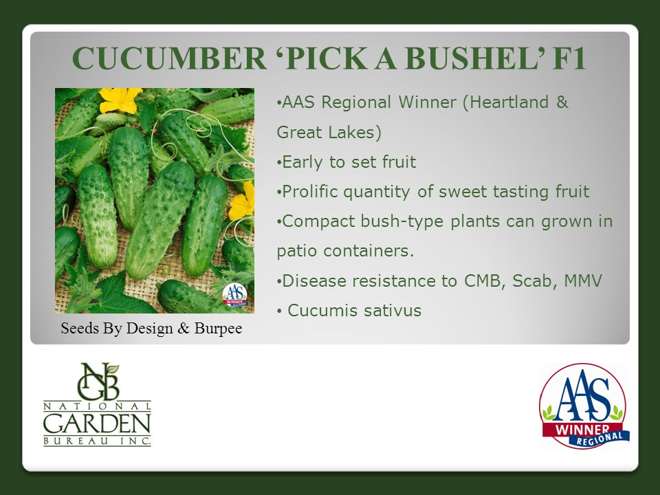 Cucumber 'Pick a Bushel' F1
