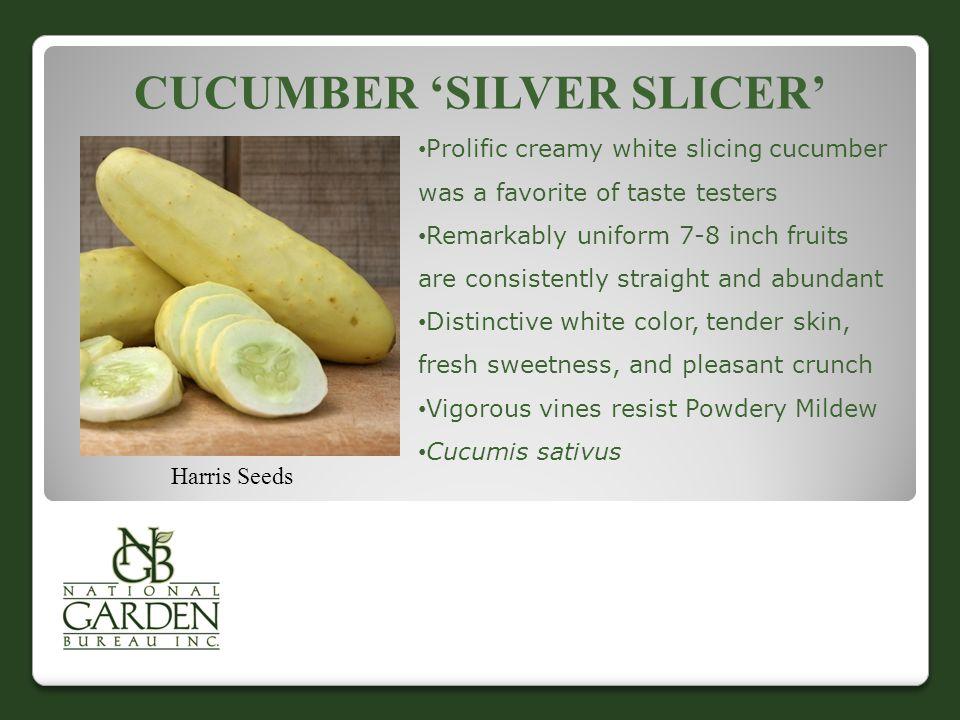 Cucumber 'Silver slicer'