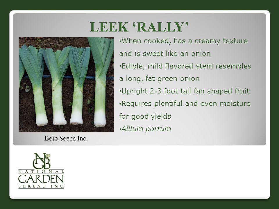Leek 'Rally' When cooked, has a creamy texture and is sweet like an onion. Edible, mild flavored stem resembles a long, fat green onion.
