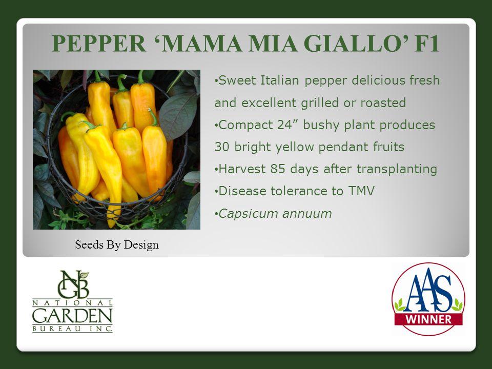 Pepper 'Mama Mia Giallo' F1