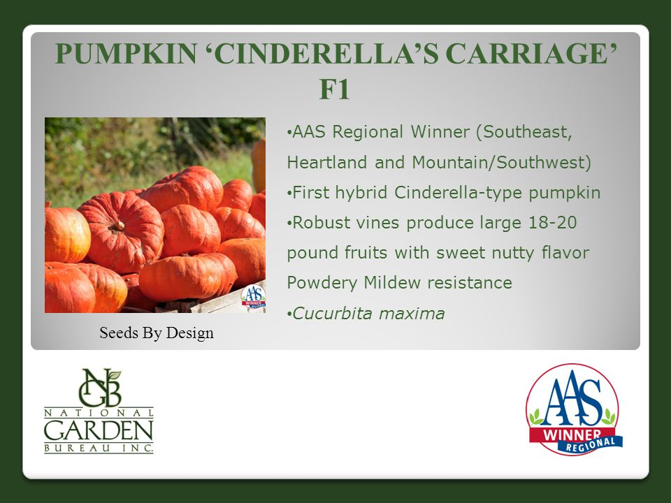 Pumpkin 'Cinderella's Carriage' F1