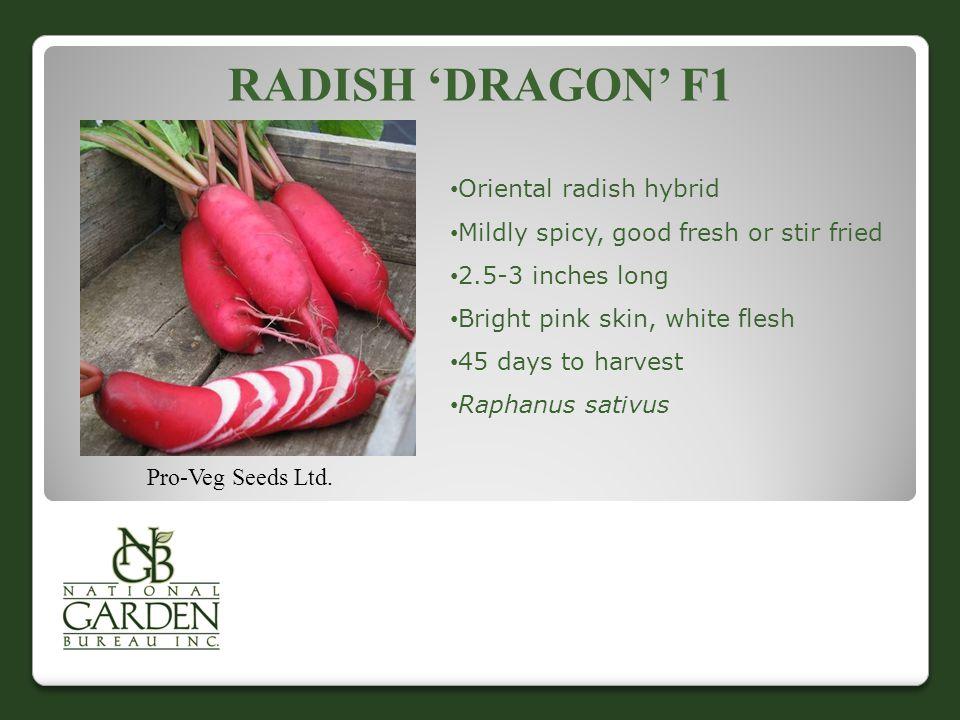 Radish 'Dragon' F1 Oriental radish hybrid